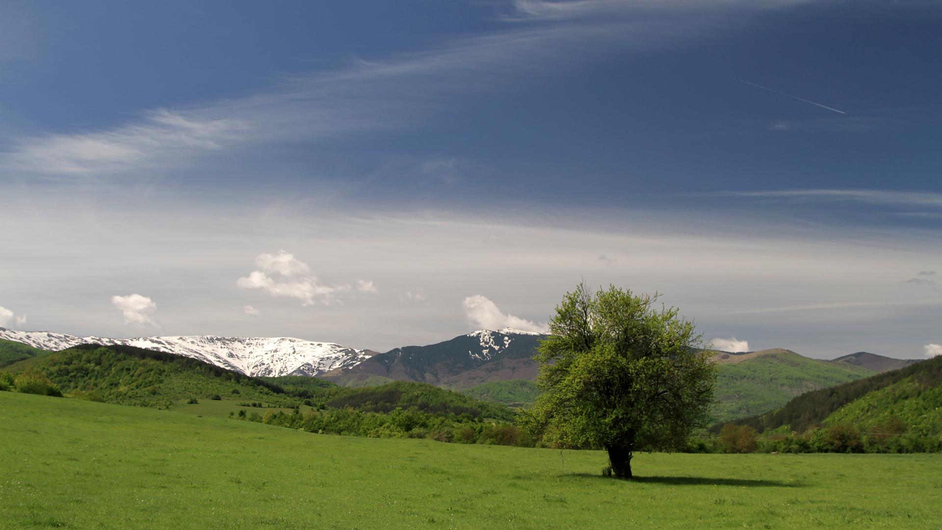 За Балкана и хората – Дърво в Западна Стара планина