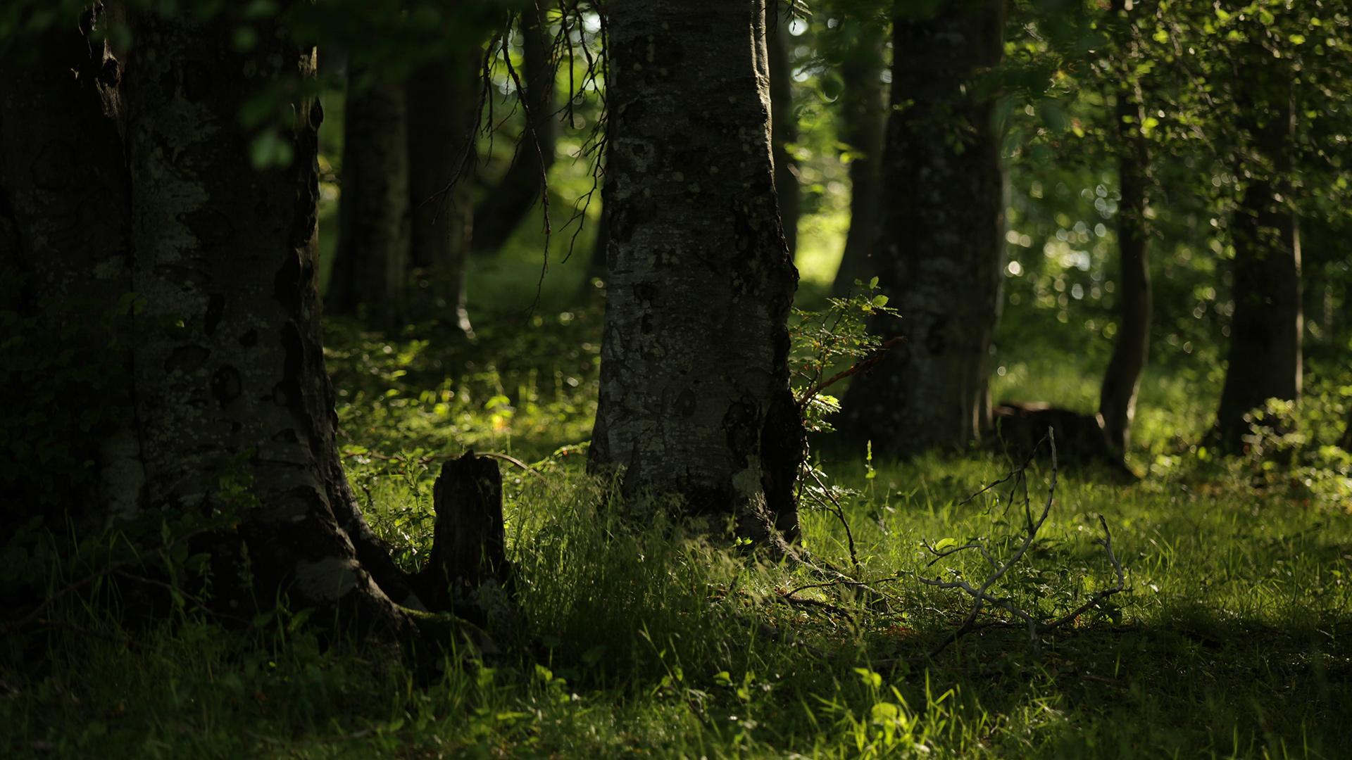 За Балкана и хората – Стара букова гора