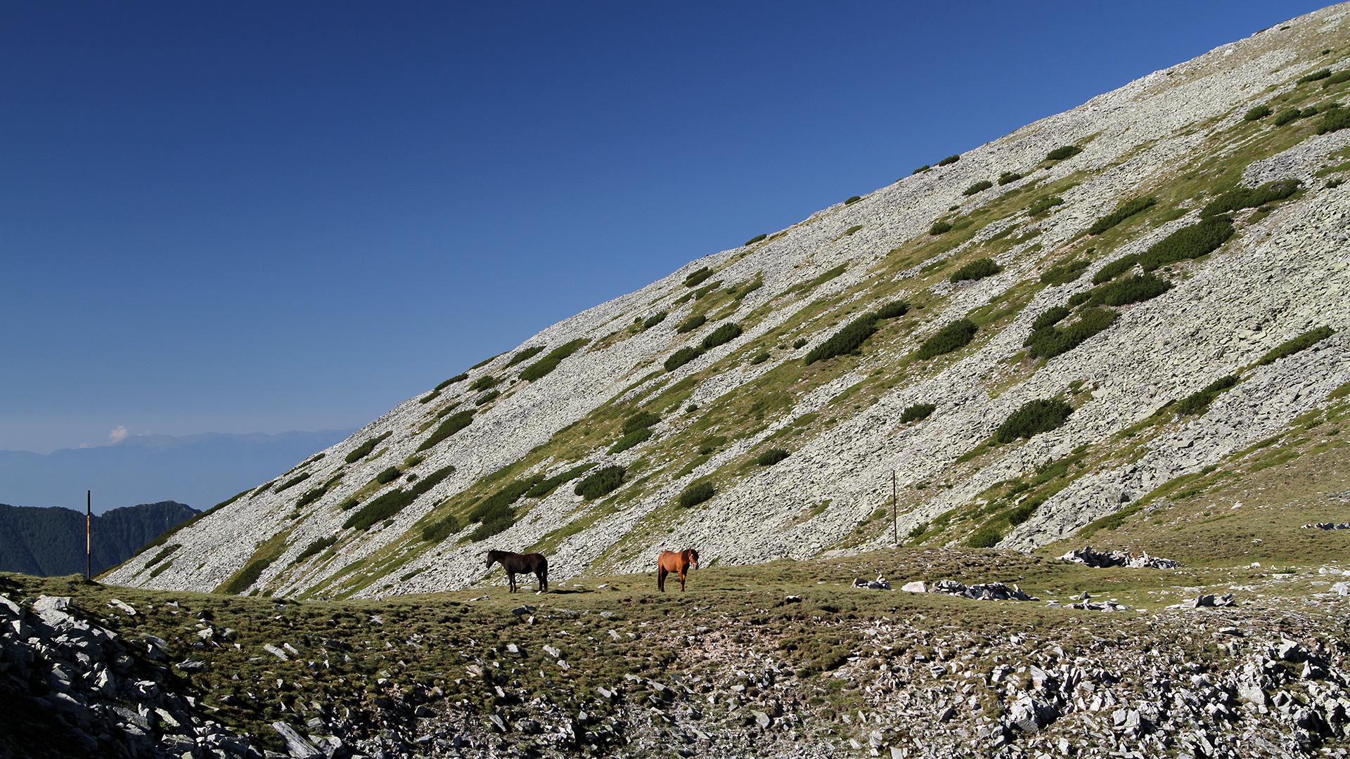 За Пирин – Диви коне