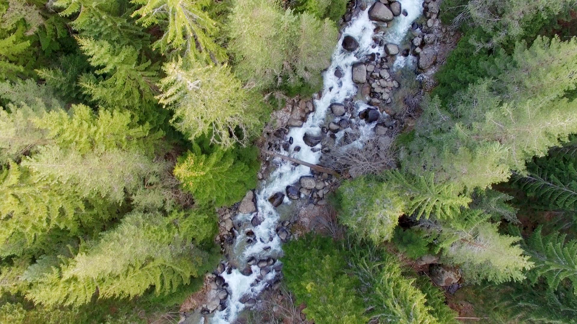 Заедно #ЗаПирин – Река Демяница
